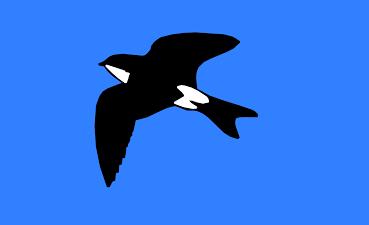 Martinic